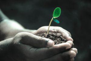 mains plante
